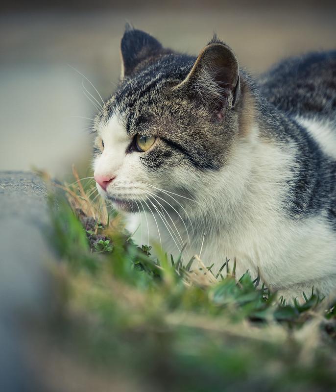 20160217_02_野良猫