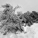 Tree and Rocks in the Snow by StefanB