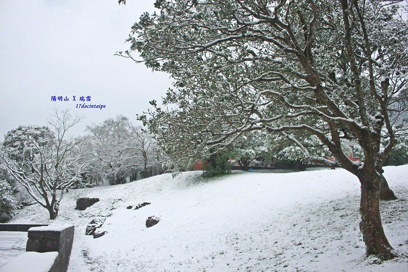 2016-台北陽明山-瑞雪-難得一見的雪白山景-17度C隨拍 (86)