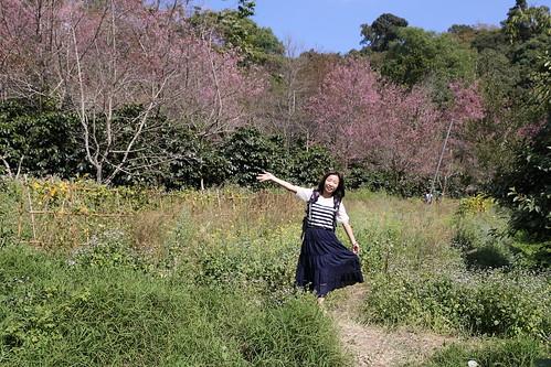 苗族村賞櫻