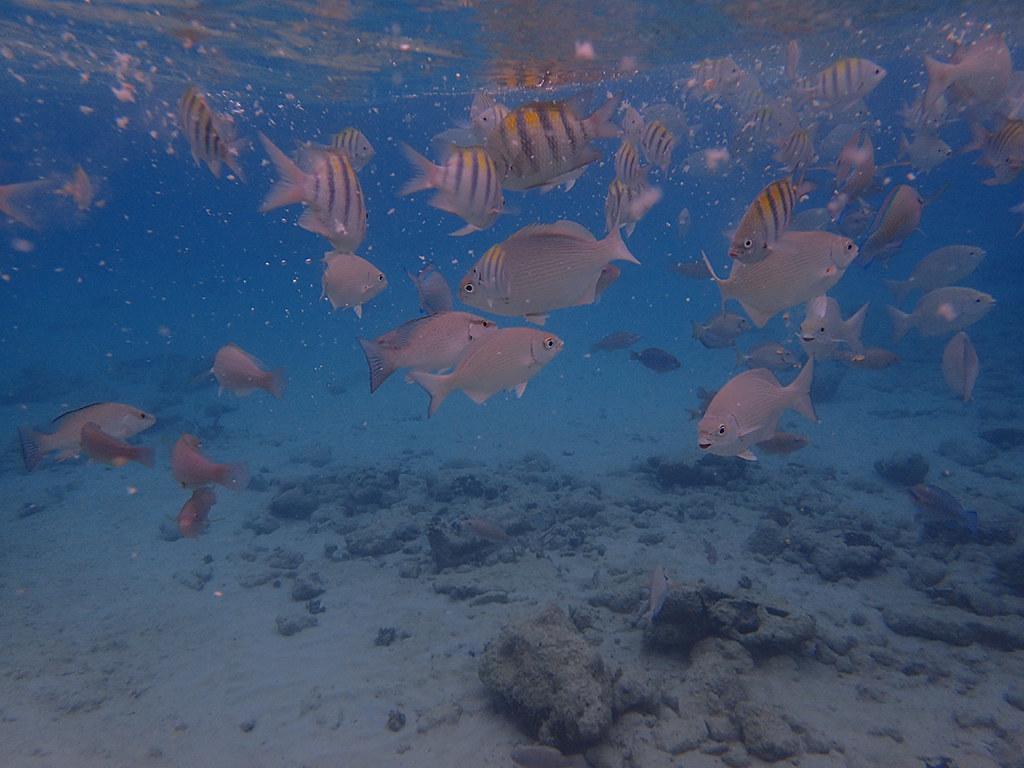 Bay of Pigs  Cuba