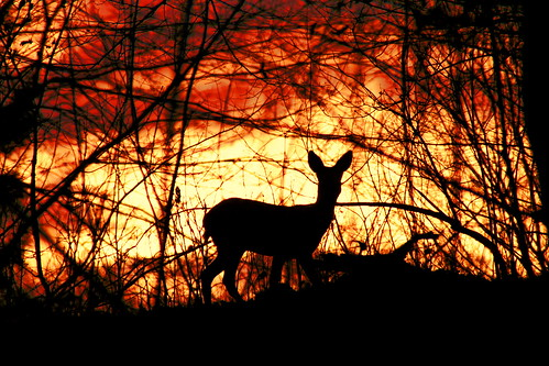 Sunset watching deer