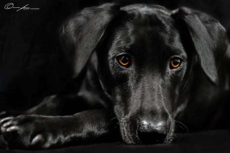 Bored dog