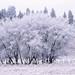 Palouse Freeze by Ryan McGinty