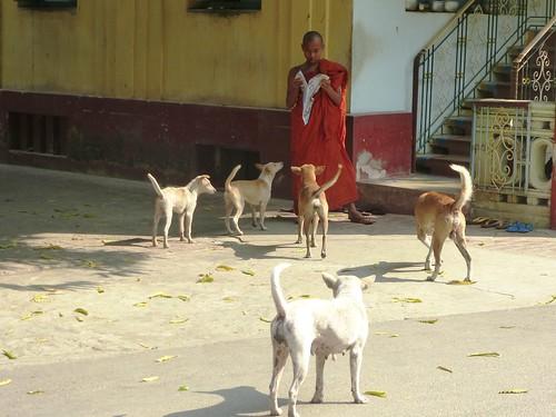 M16-Mandalay-Quartier des moines-Moines (13)