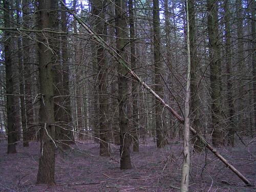 20080511 20477 0901 Jakobus Wald Bäume