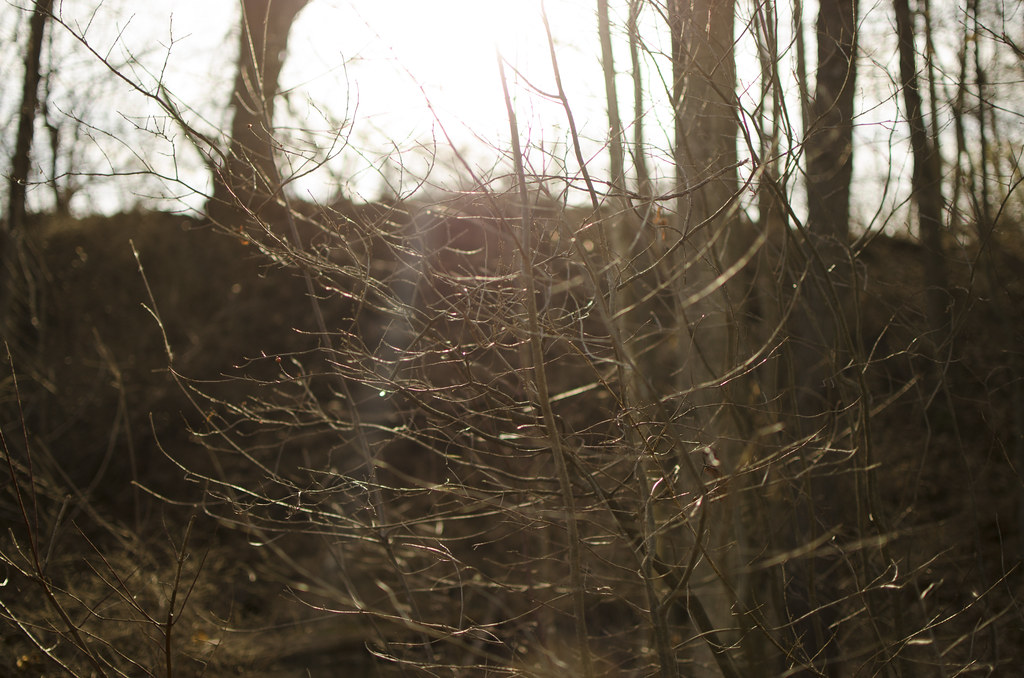 in the woods // the edge of spring 3