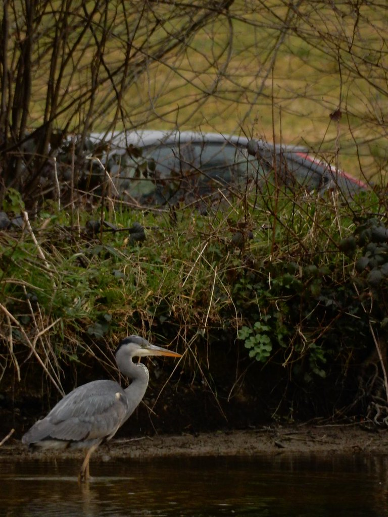 Heron, Groombridge Place Ashurst to Eridge