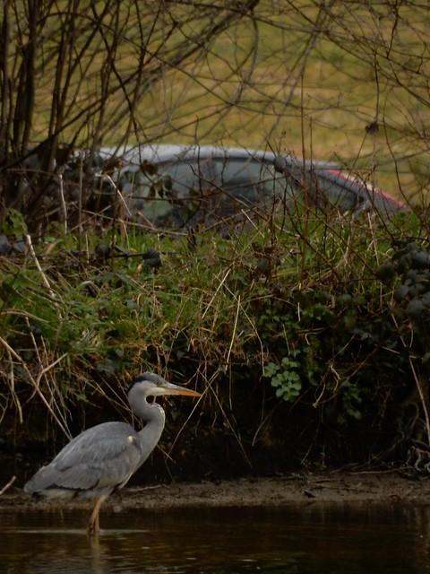 Heron, Groombridge Place
