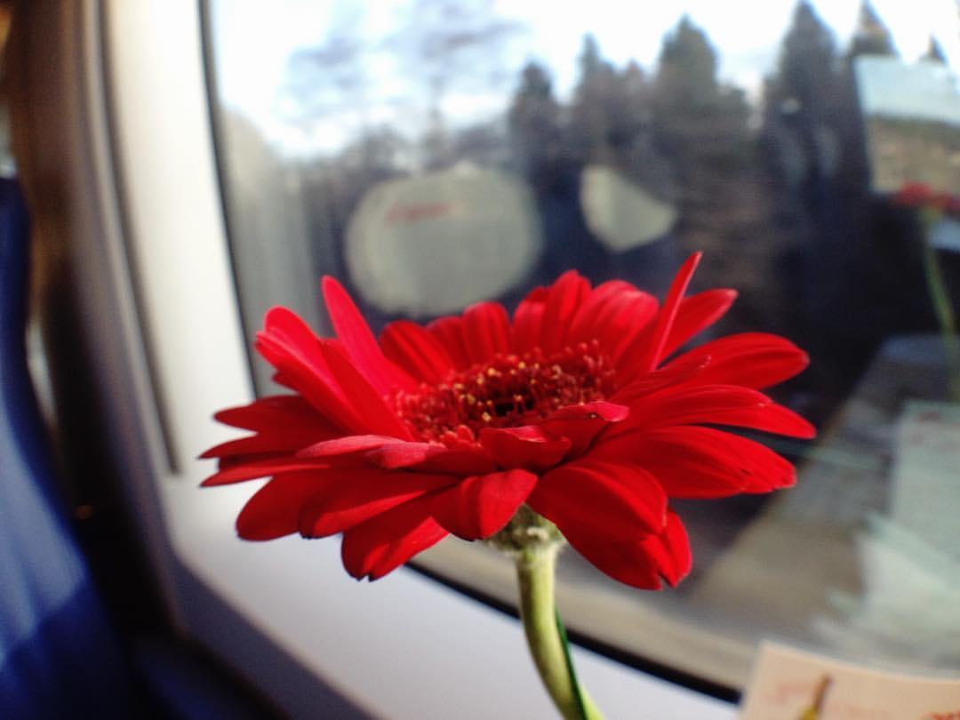 Цветок в купе