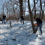 Removing invasive trees