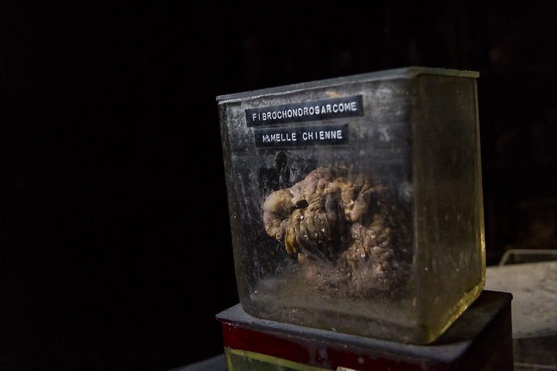 驚魂比利時「廢棄獸醫學院」福馬林的怪誕美學20