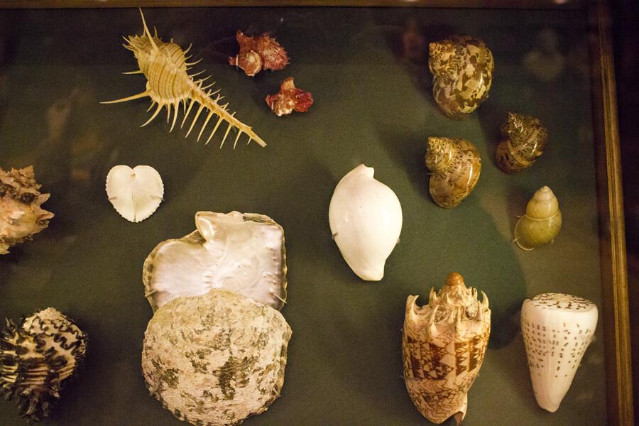 shells, seashells,british museum, britishmuseum, the british museum, british museum london, artifacts at british museum, london, museums in london, london museums, things to do in london