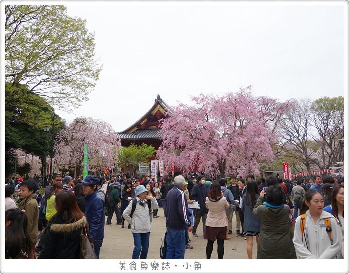 【日本東京】清水觀音堂賞櫻 @魚樂分享誌