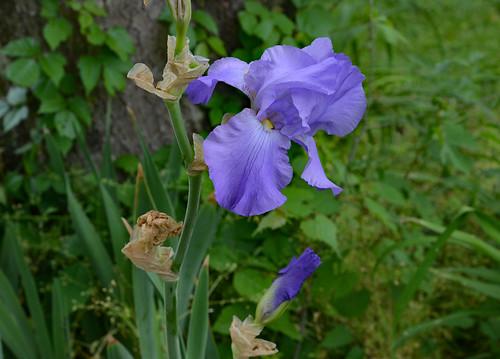 Dress Me in Lavender