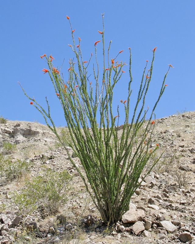 2008 Palm Springs-0976