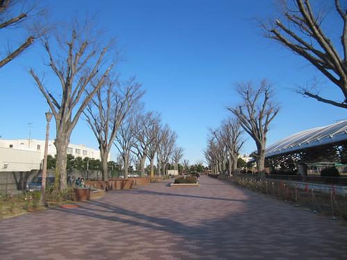中山競馬場のけやき公苑への道