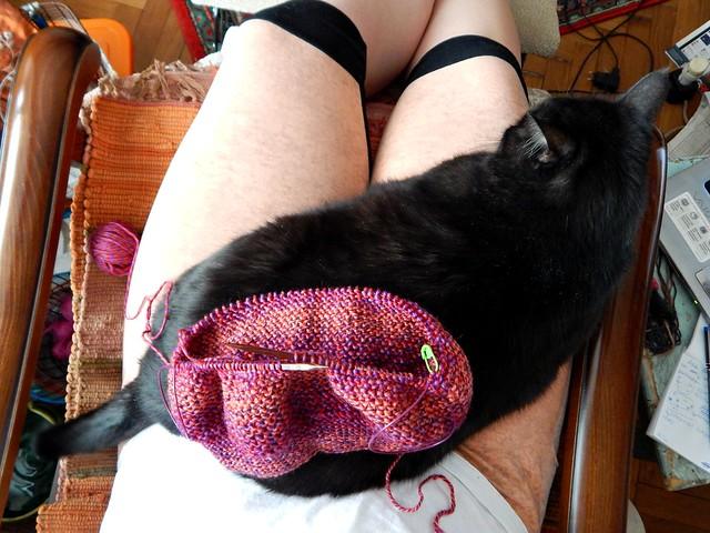 котоселфи с вязанием | cat-and-knitting-selfie | Хорошо.Громко.