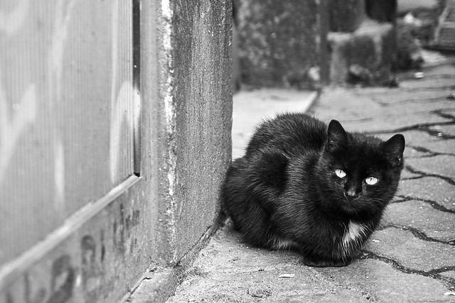 The Lonesome Stray