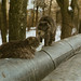 Cats by s.luzin