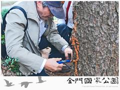 松材線蟲(20151210)-01