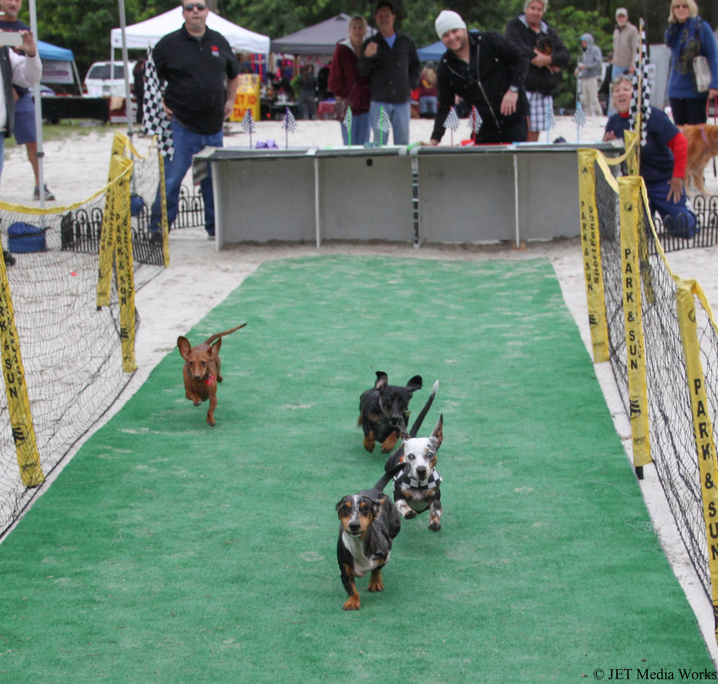 Wiener Dog Derby
