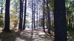 Thoreau's front yard.