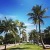 Not Boston #PalmBeach #warmth #palmtrees #Florida