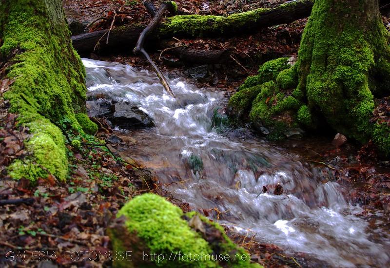 Stream / potok