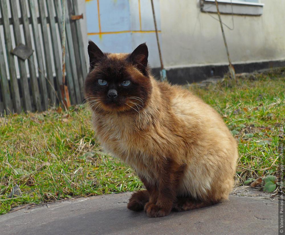 20160306_novik_cat_001