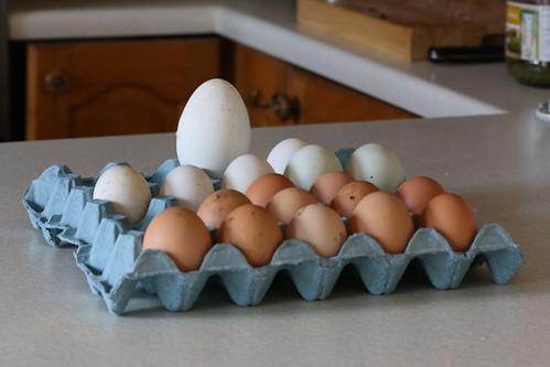 Eggy bonanza (goose, duck, chicken)