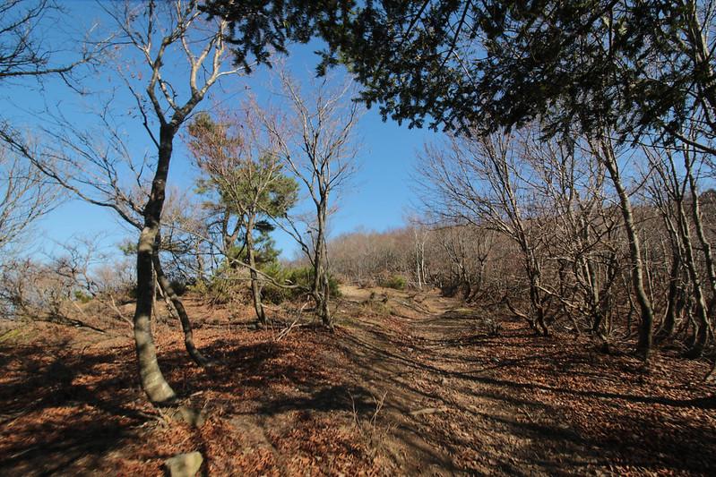 20141122-武奈ヶ岳&京都ライトアップ-0132.jpg