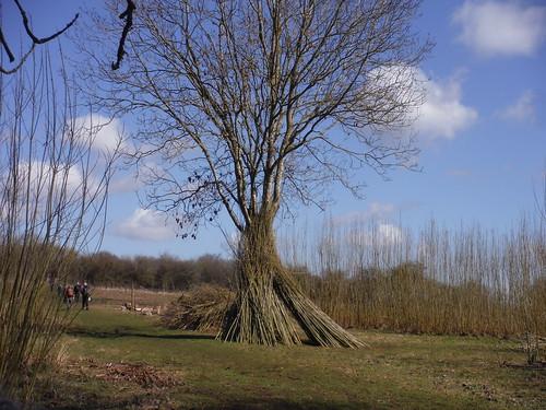Long Mead Copse plantation