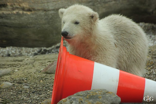 Zoo Bremerhaven 09.04.16 2.Teil48