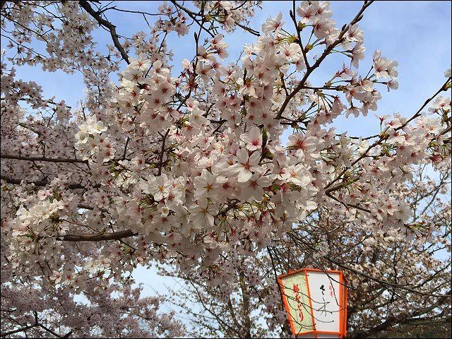 岡山公園20160406_808