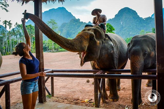 Elephant Hills Elephant Camp Feeding