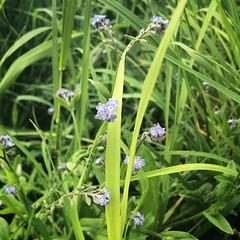 Des ptites fleurs, des ptites fleurs, toujours des ptites #fleurs 🎶 #flowerspirit #flowermania #igerscognac #nature #naturelovers #flowers  #grass #spring