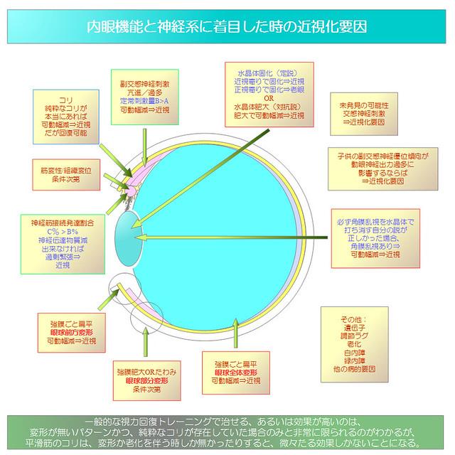 視力回復トレーニング|内眼機能と神経系に着目した時の近視化要因の分析図02