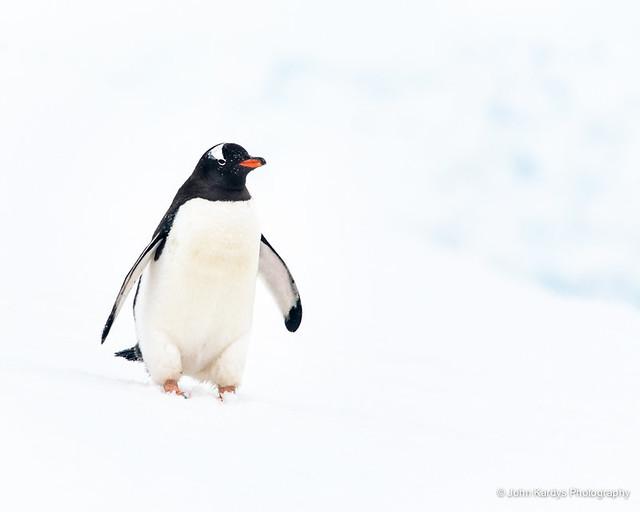 Antarctica 2015-603