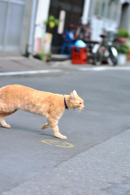 Tsukiji_cat_03