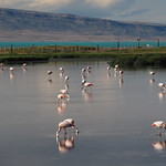 So, 20.12.15 - 18:11 - Lagune Nimes - El Calafate