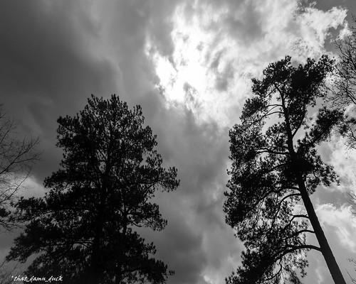 nature unitedstates southcarolina