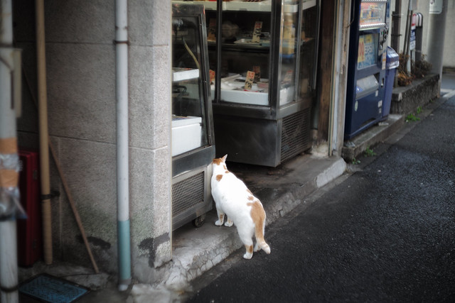 Cat of fishmonger
