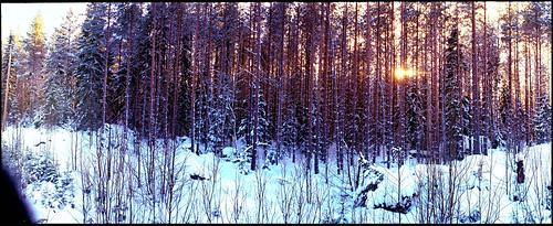winter sun snow woods horizon panoramic