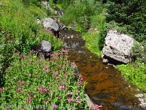 Dundee Creek below Dundee Falls, Shoshone National Forest, Wyoming