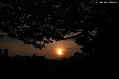morning summer sun sunlight tree sunrise dawn singapore sunday amateur nus 星期天 校园 夏天 日出 太阳 일요일 여름 일출 早上 早晨 新加坡 xiaomi 阳光 태양 촬영 mobilephotography 싱가포르 싱가폴 minote mahuaqingphotography