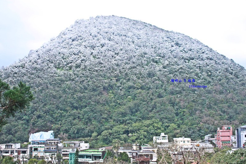 2016-台北陽明山-瑞雪-難得一見的雪白山景-17度C隨拍 (164)