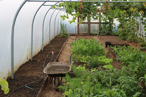 Wheelbarrow in polytunnel | by Local Food Initiative