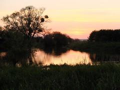Lac de Grand-Lieu au soleil couchant (44)