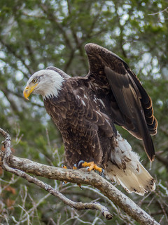 SPS_Eagles_001